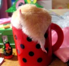 Hamster Butt Cup