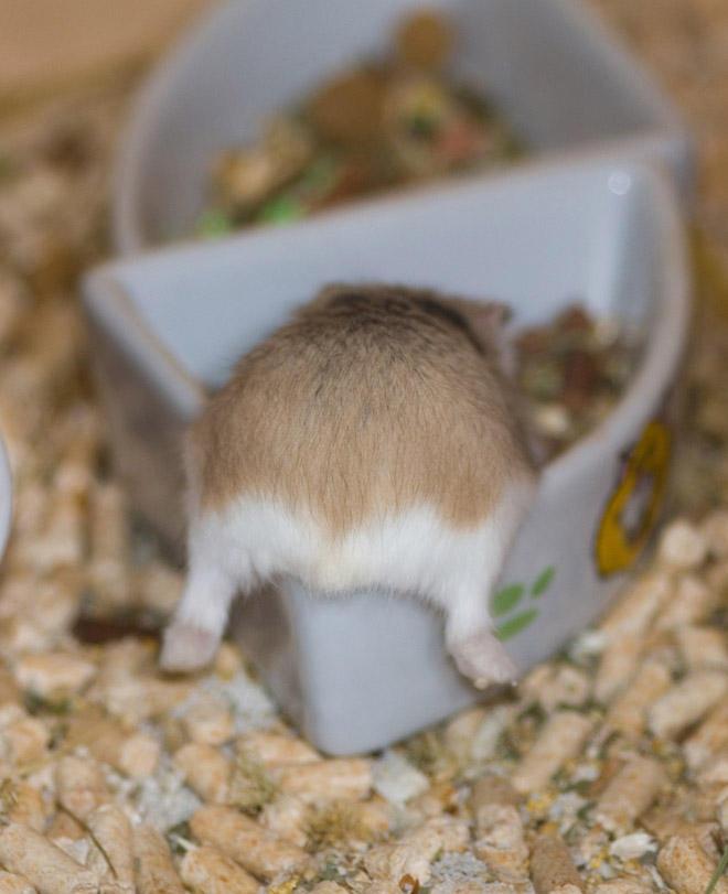 Hamster Butt Bowl