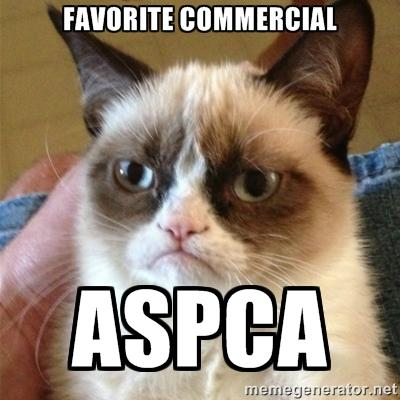 Grumpy Cat ASPCA