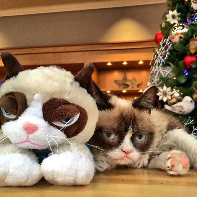 With A Grumpy Cat Plush