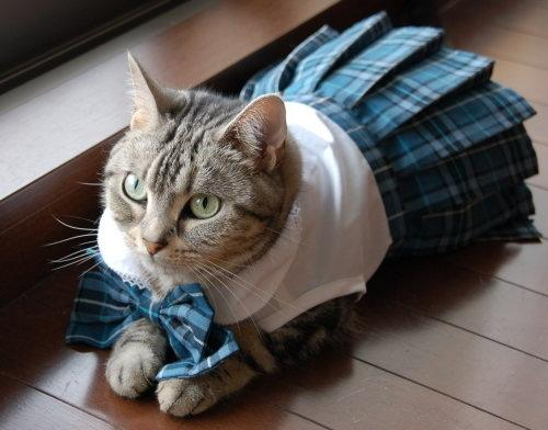 School Girl Cat