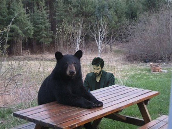 Sad Picnic Patient Bear Bear Sitting At Table Know