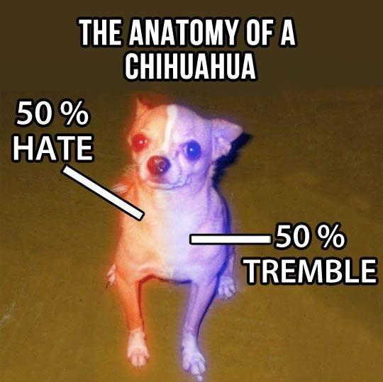 Word For The Weekend: CHIHUAHUA
