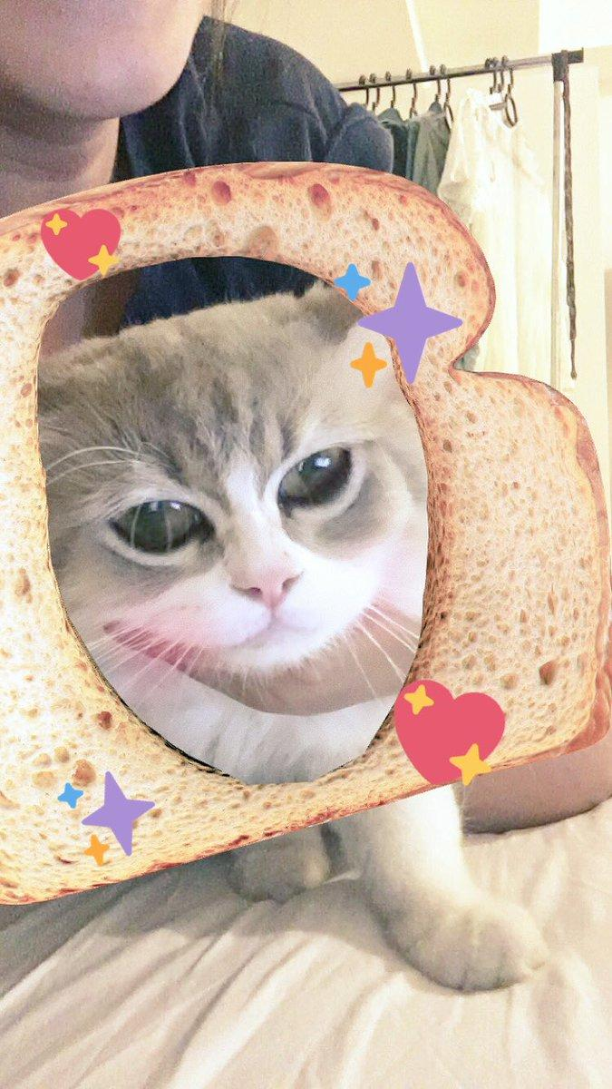 Cat Breading Know Your Meme - 8 cat puns that will put a smile on your face