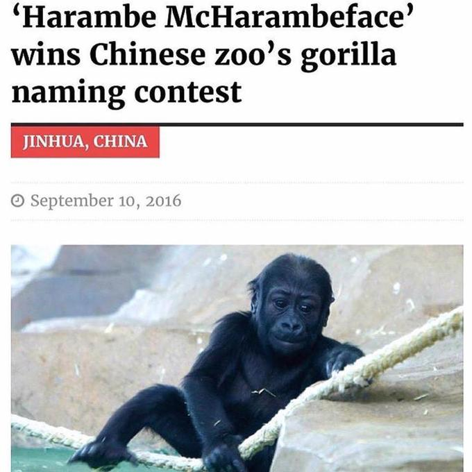 Harambe The Gorilla Know Your Meme - 18 hilarious brand new animal names that are so much better than the originals