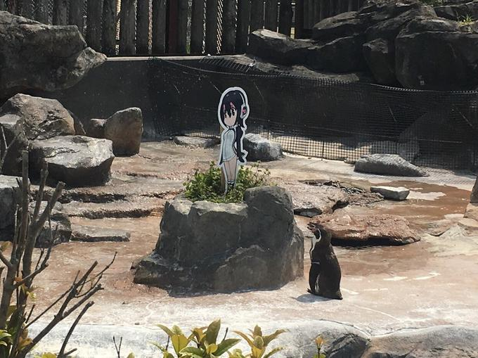 Photo of Grape-Kun staring at Hululu in his zoo enclosure