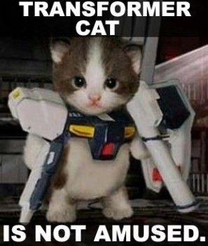 [Image - 25911] | Trashcat Is Not Amused | Know Your Meme