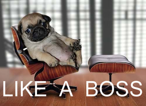 10 ways to celebrate your boss  like a boss