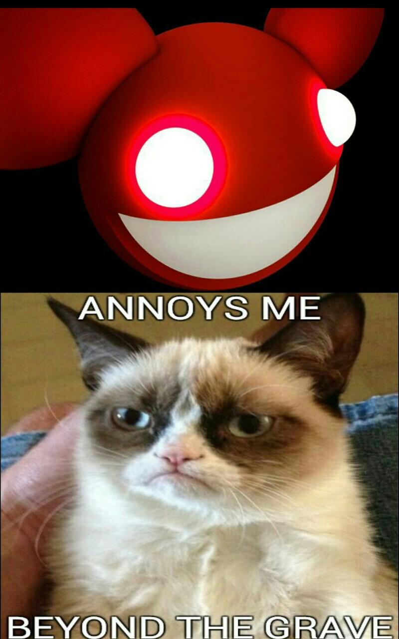 Nope Cat Meme Nope Cat Meme Love