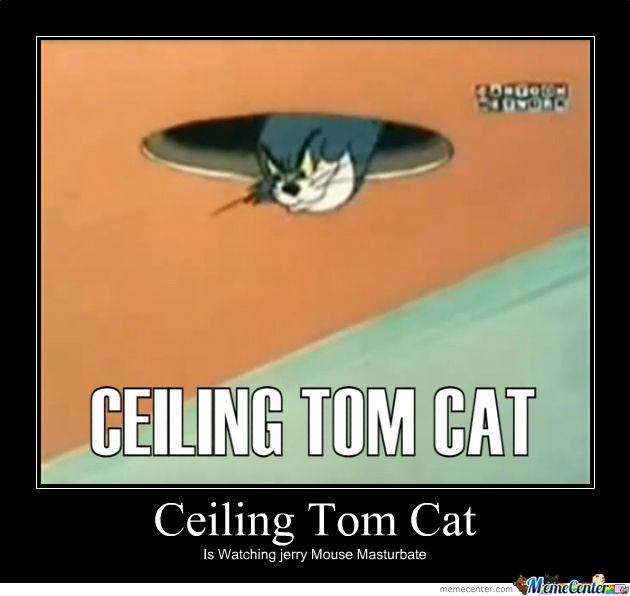 Ceiling Tom Ceiling Cat Know Your Meme