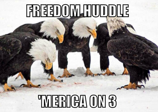 Image result for american freedom