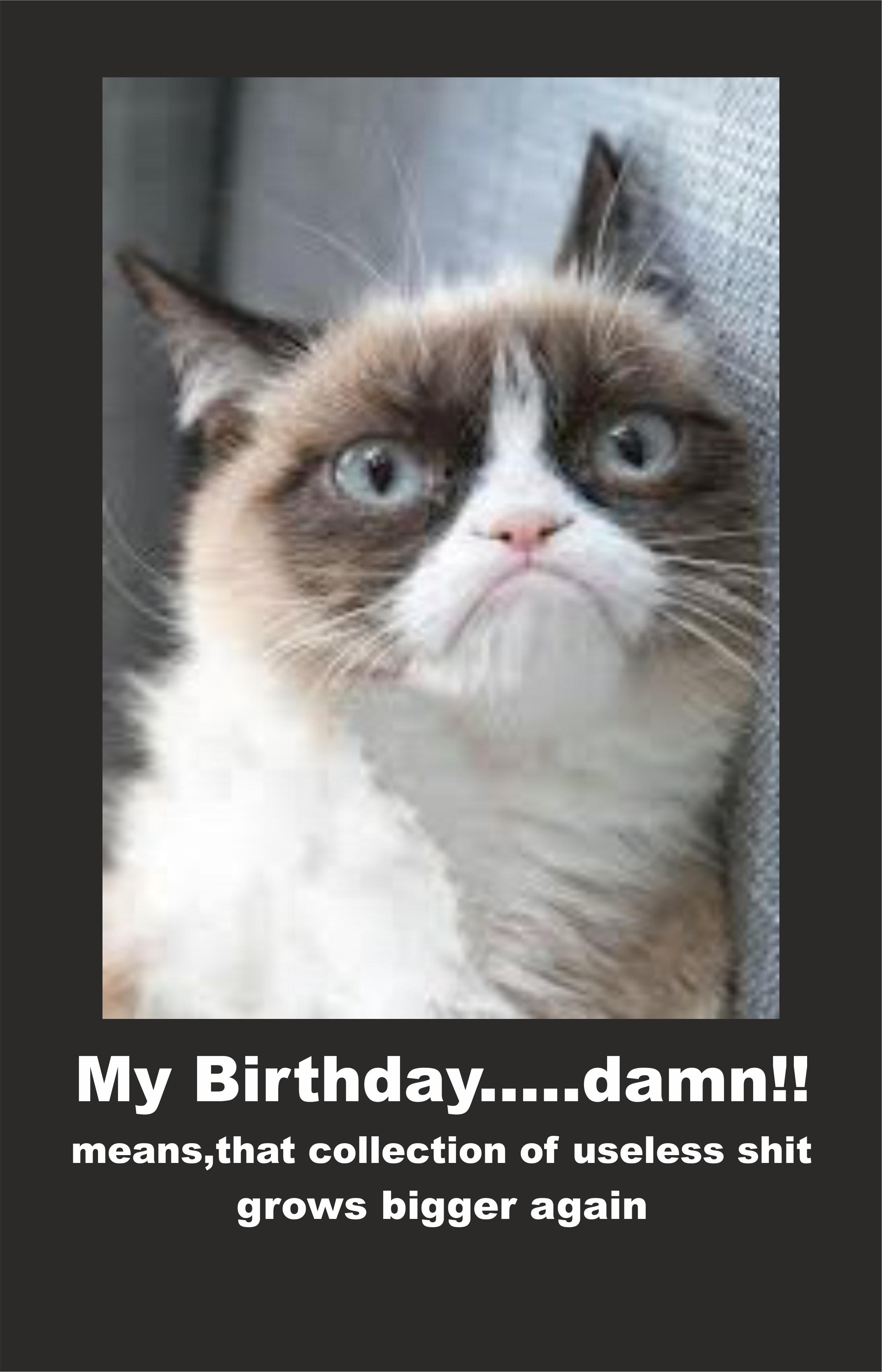 Grumpy Cat -Ima...
