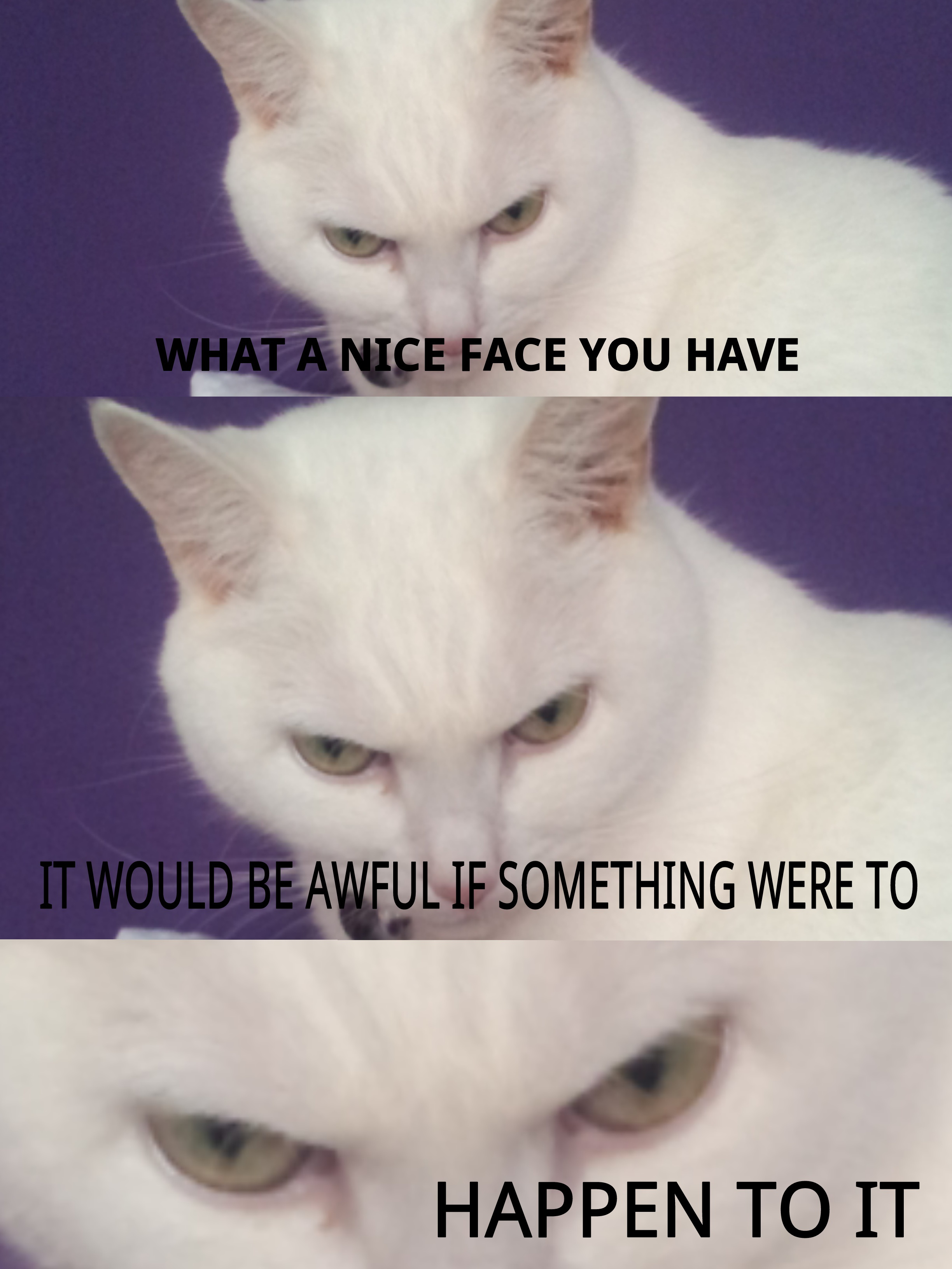 Funny White Cat Meme : My cat luna is evil lolcats know your meme