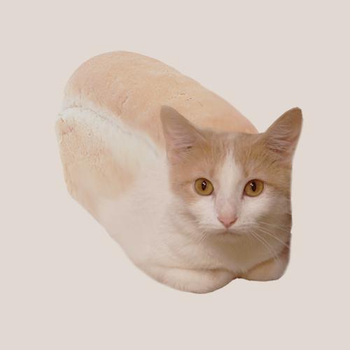 cat in lamp
