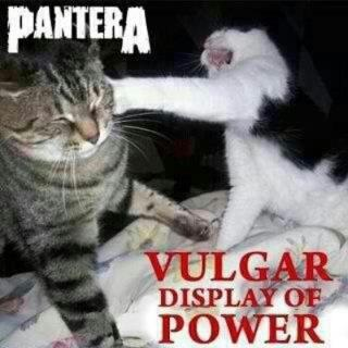 Imagini pentru grumpy cat metal memes
