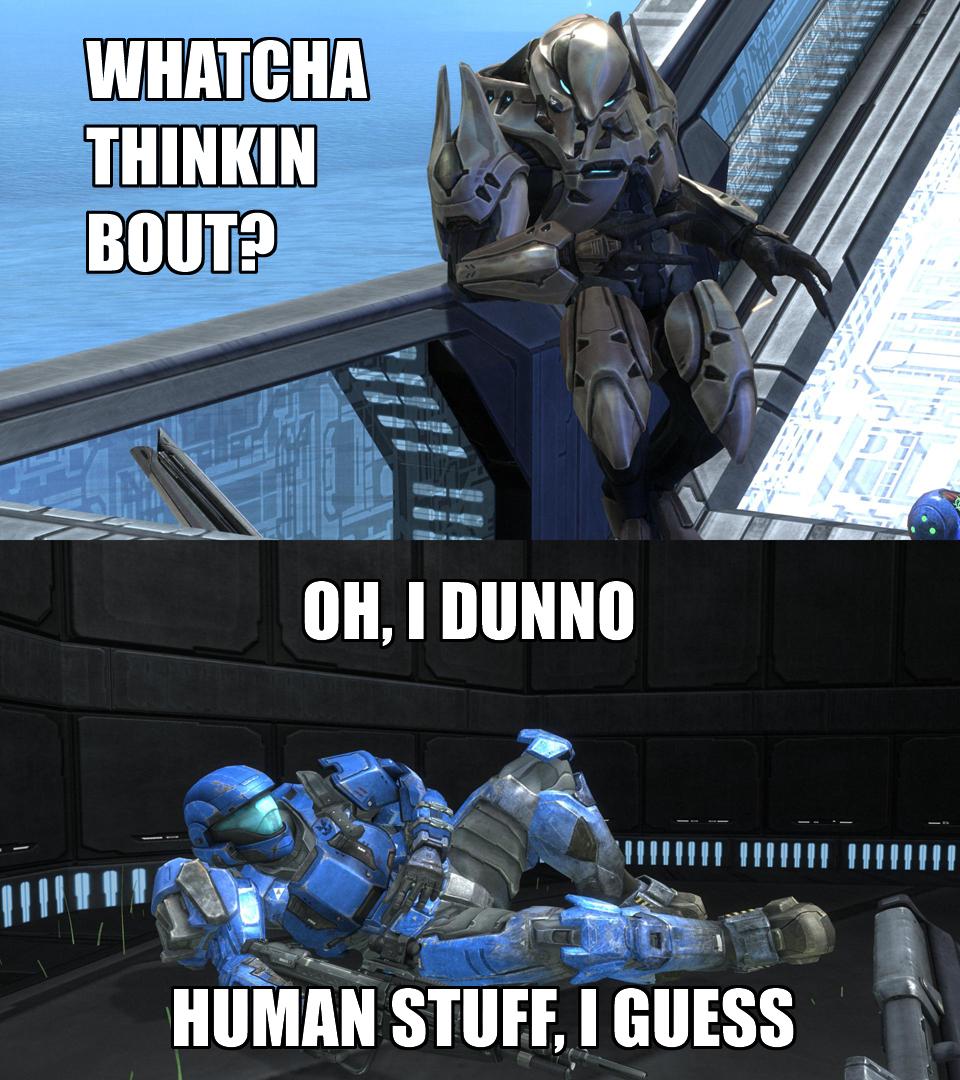 Latest Cat Memes