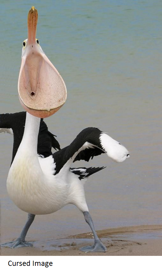 Cursed Pelican From Front Image